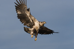 Inspiration - The seven principles of an eagle